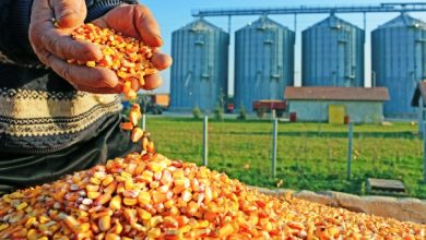 What is causing food deficit in South Africa? Expert speaks