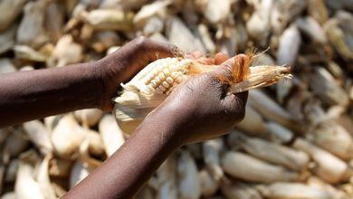 Unpacking the misconceptions about Africa's food imports