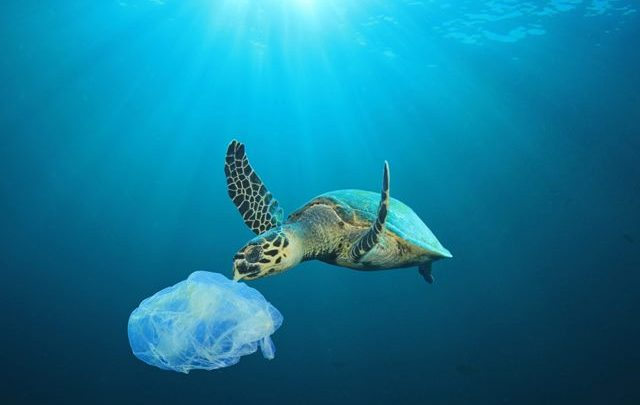 Countries join global initiative to tackle marine litter
