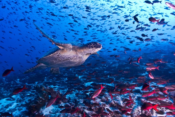 3 lessons we can learn from marine protection in sub-Saharan Africa