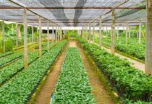 Africa Investment Forum roundtable event showcases agribusiness investment opportunities